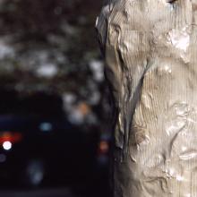light_pine_fine_grain_close_erik_peterson_2004.jpg